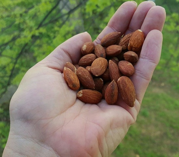 Almonds - Low Carb Snacks