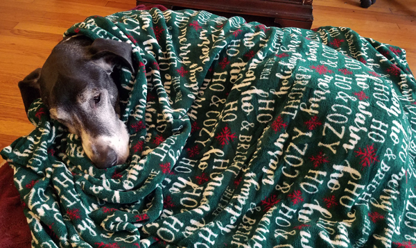Holiday Great Dane